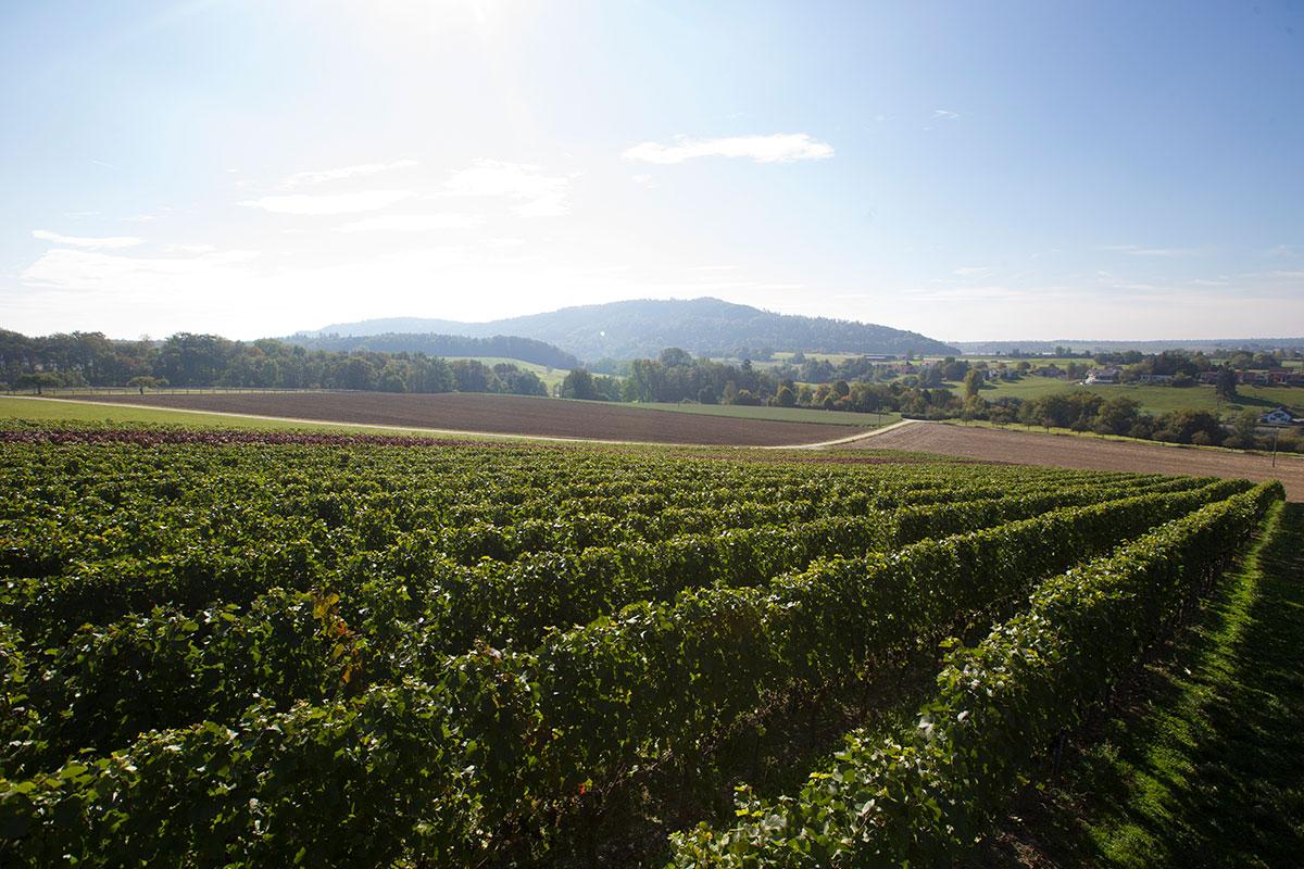 Weingut Zolg Gailingen